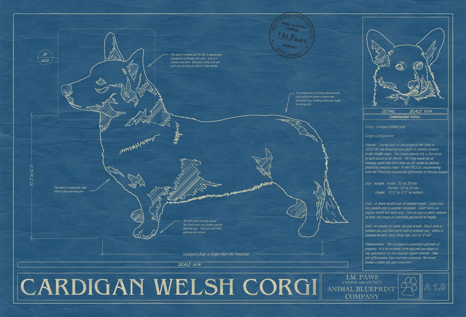 Corgi cardigan welsh animal blueprint company cardigan welsh corgi dog blueprint malvernweather Images