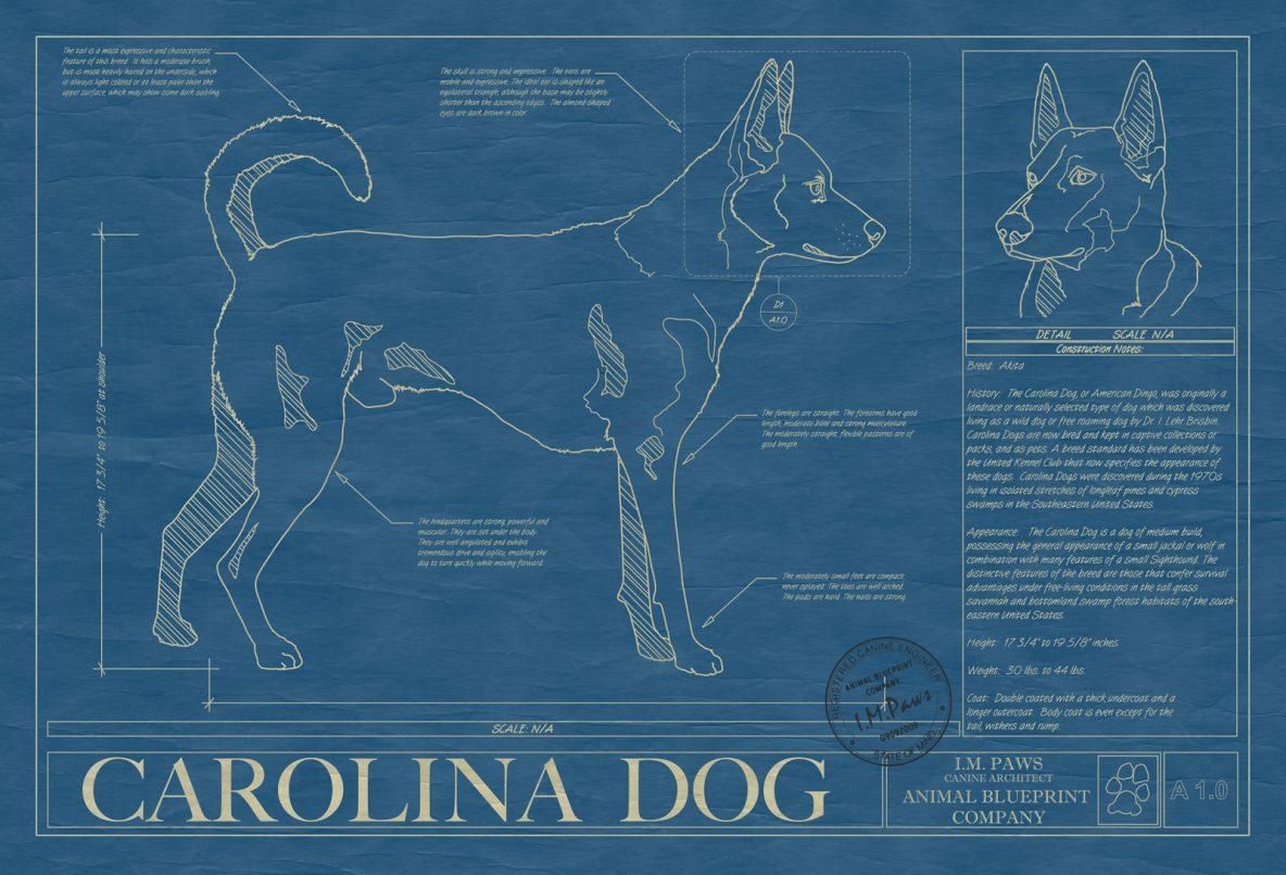 Carolina Dog Blueprint