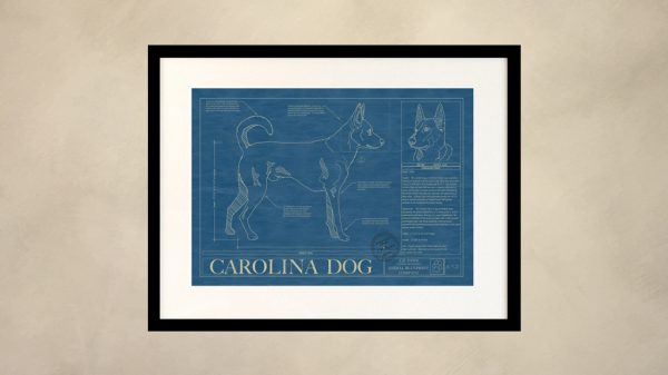 Carolina Dog Wall Blueprint