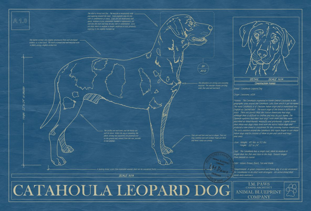 Catahoula Leopard Dog Blueprint