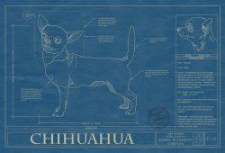Chihuahua Dog Blueprint