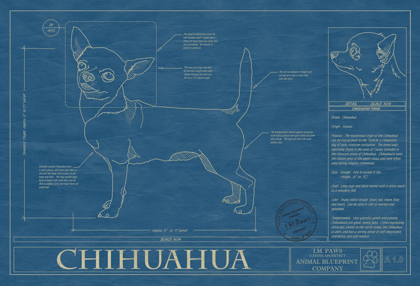Chihuahua animal blueprint company chihuahua dog blueprint malvernweather Images