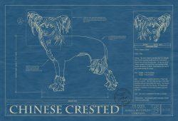 Chinese Crested Dog Blueprint