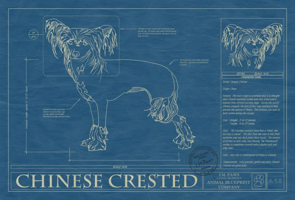 Chinese Crested Dog Blueprint