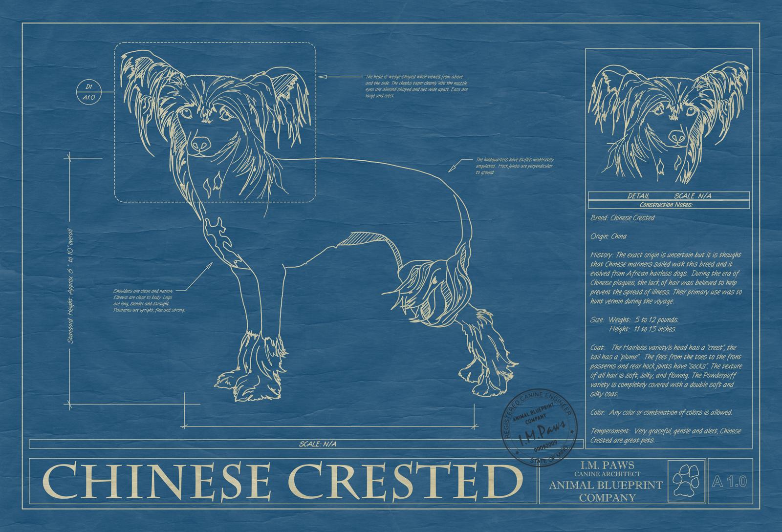 Chinese crested dog animal blueprint company chinese crested dog blueprint malvernweather Gallery