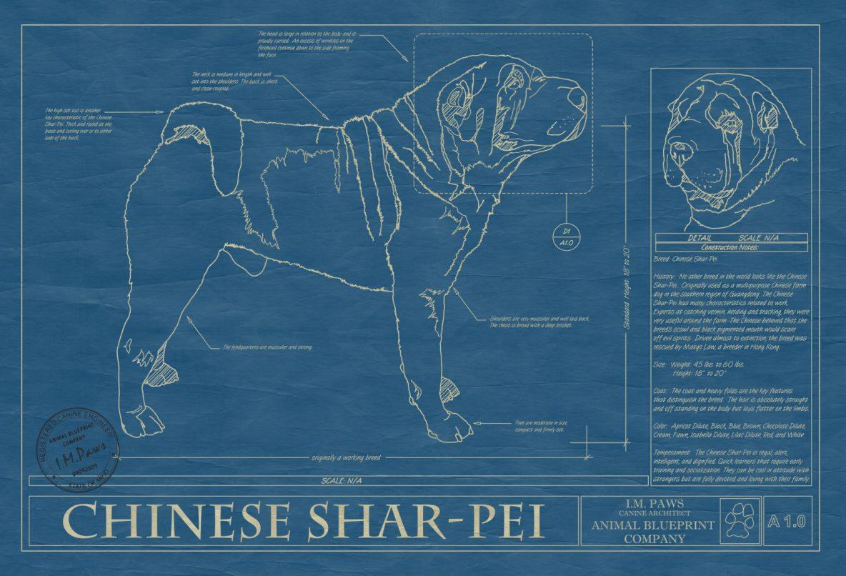 Chinese Shar-Pei Dog Blueprint