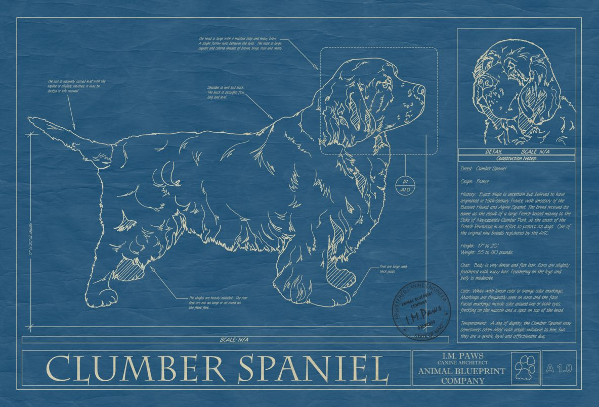 Clumber Spaniel Dog Blueprint