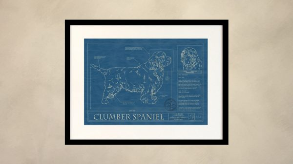 Clumber Spaniel Dog Wall Blueprint