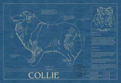 Collie Dog Blueprint