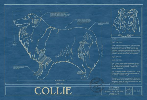 Collie Dog Blueprint