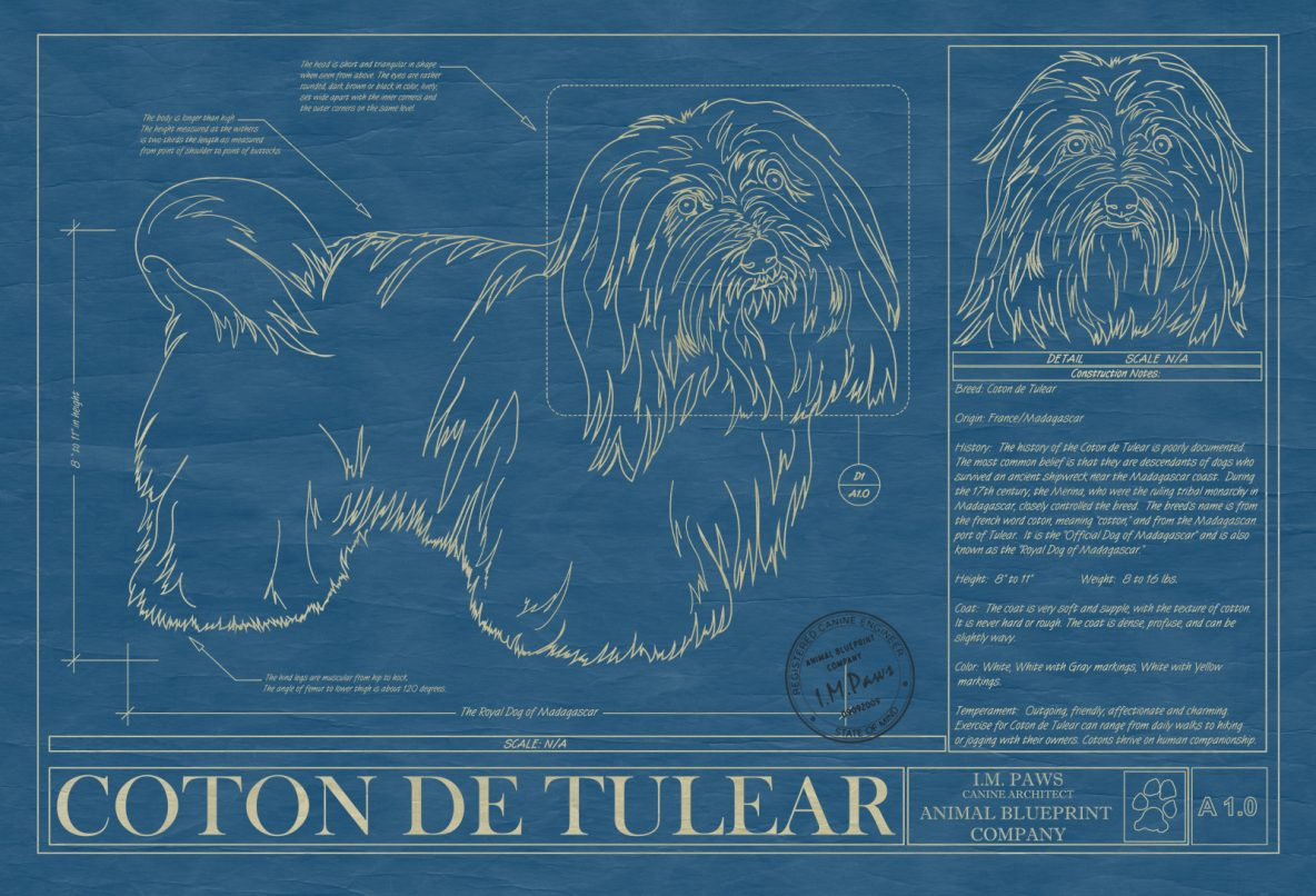 C d archives page 2 of 3 animal blueprint company coton de tulear dog blueprint malvernweather Gallery
