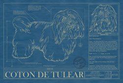 Coton De Tulear Dog Blueprint