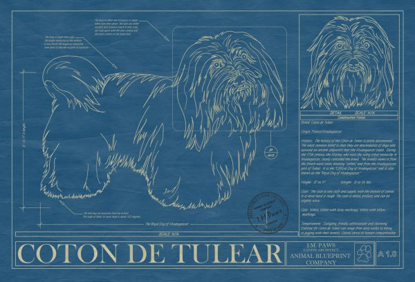 Coton De Tulear Dog Blueprint