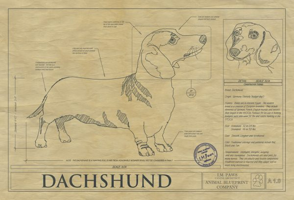 Dachsund Dog Drawing