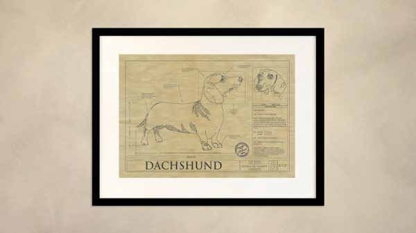 Dachsund Dog Wall Drawing