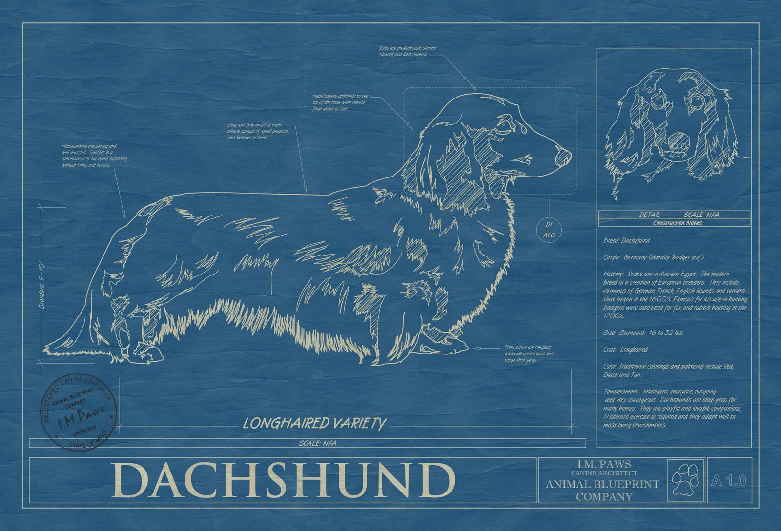 Dachshund longhair animal blueprint company dachsund longhaired dog blueprint malvernweather Gallery