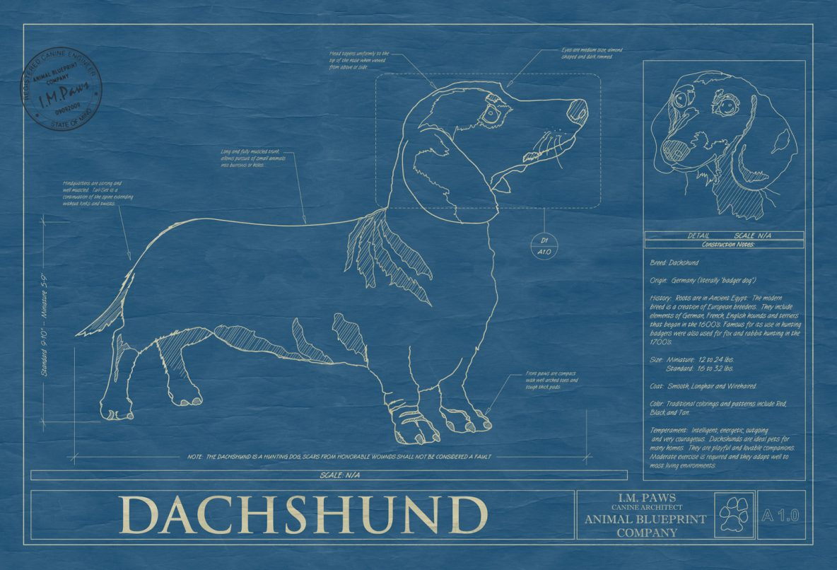 Dachsund Dog Blueprint
