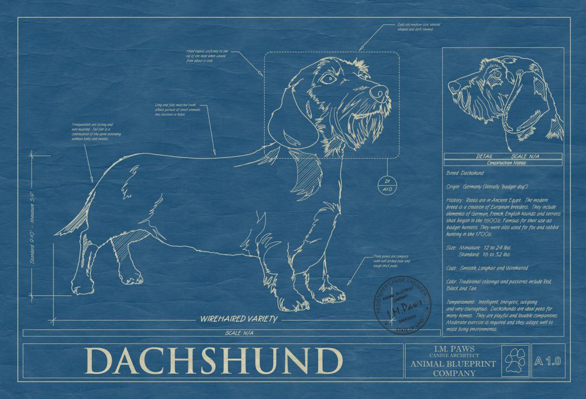 Dachsund Wirehaired Dog Blueprint