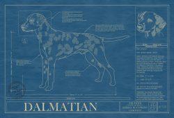 Dalmatian Dog Blueprint