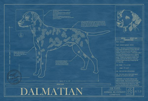 Dalmatian Dog Blueprint