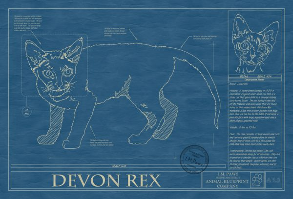 Devon Rex Cat Blueprint