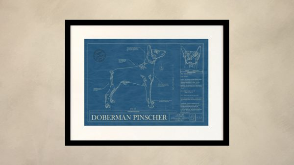 Doberman Pinscher Dog Wall Blueprint