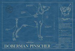 Doberman Pinscher Dog Blueprint