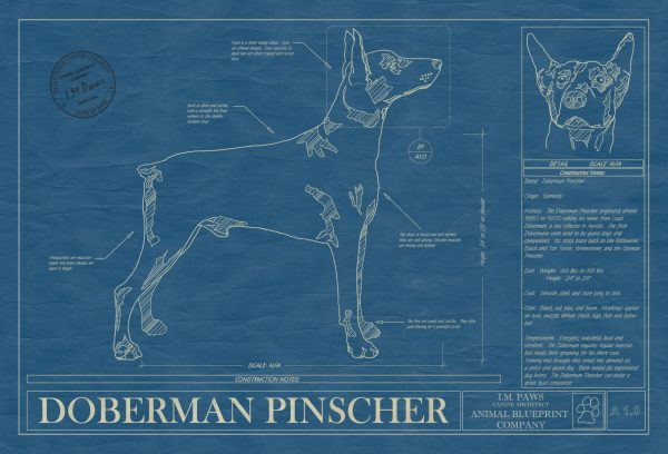Doberman Pinscher Dog Blueprint