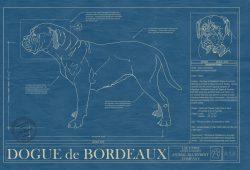 Dogue de Bordeaux Dog Blueprint