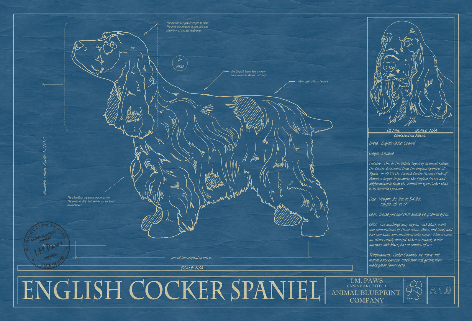 Cocker spaniel english animal blueprint company english cocker spaniel dog blueprint malvernweather Images