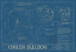 English Bulldog Dog Blueprint