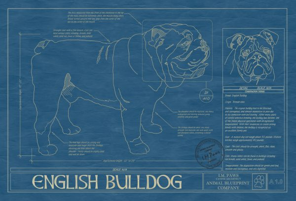 English Bulldog Dog Blueprint