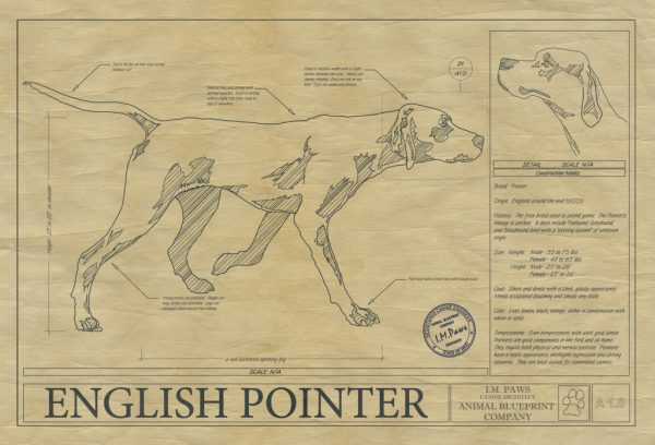 English Pointer Dog Drawing
