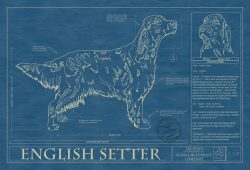 English Setter Dog Blueprint