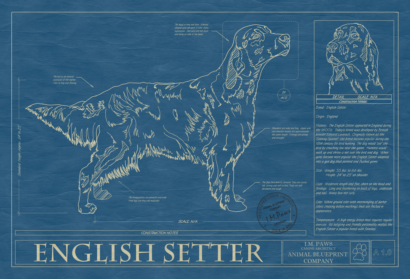 English setter animal blueprint company english setter dog blueprint malvernweather Gallery
