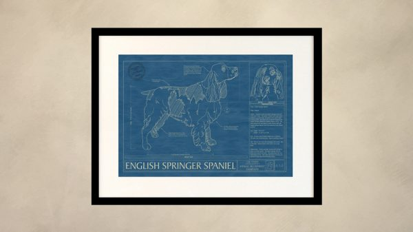 English Springer Spaniel Dog Wall Blueprint