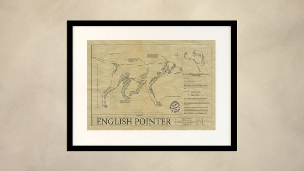 English Pointer Dog Wall Drawing