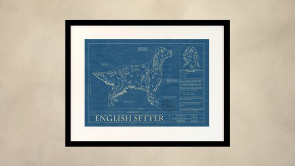 English Setter Dog Wall Blueprint