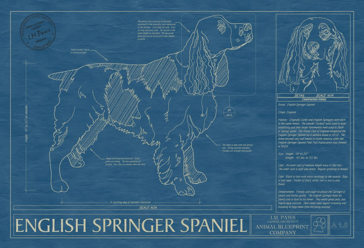 English Springer Spaniel Dog Blueprint