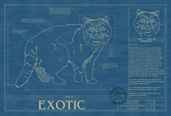 Exotic Cat Blueprint
