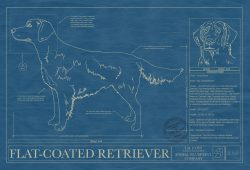 Flat-Coated Retriever Dog Blueprint