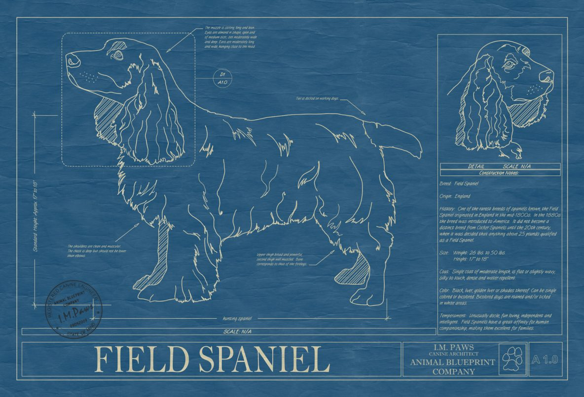 Field Spaniel Dog Blueprint