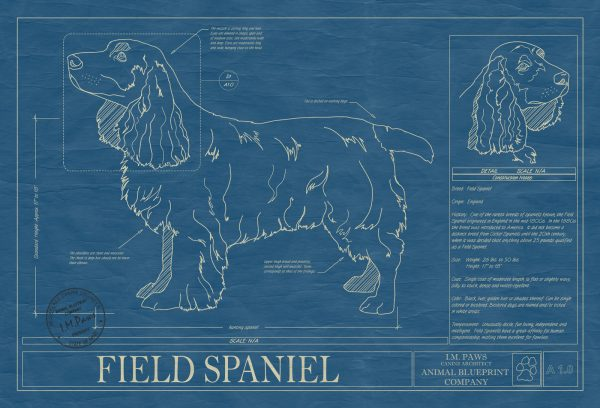 Field Spaniel Dog Blueprint