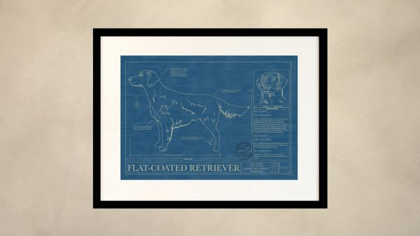Flat-Coated Retriever Dog Wall Blueprint
