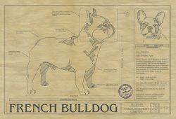 French Bulldog Dog Drawing