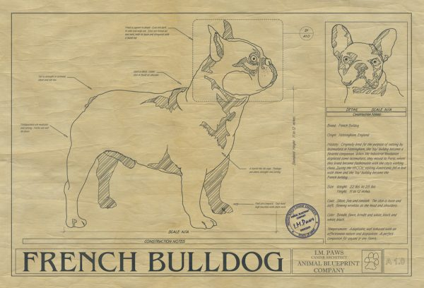 French Bulldog Dog Drawing