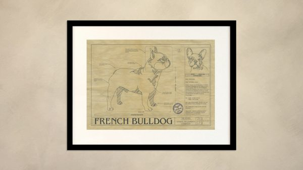 French Bulldog Dog Wall Drawing