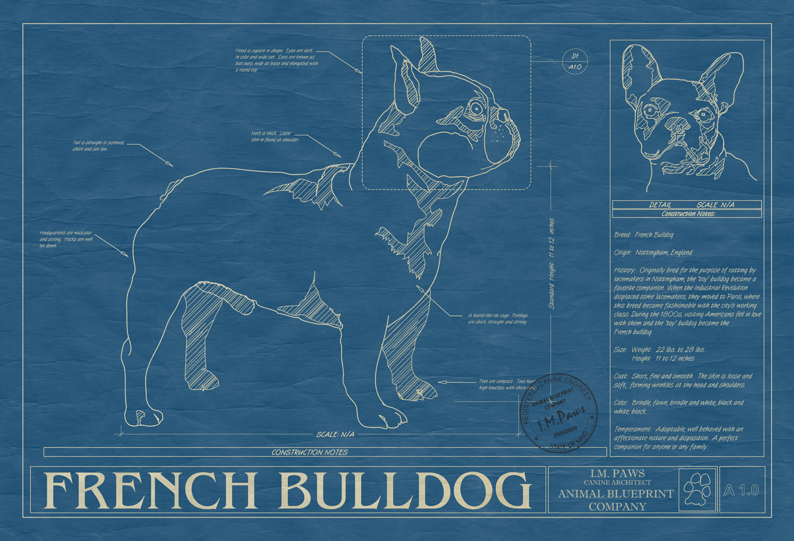 French bulldog animal blueprint company french bulldog dog blueprint malvernweather Image collections