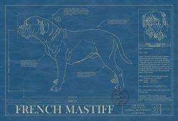 French Mastiff Dog Blueprint