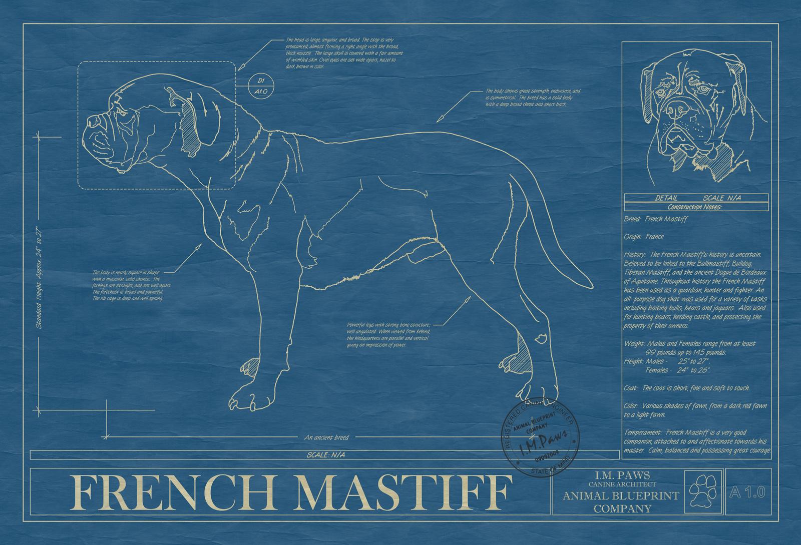 French mastiff animal blueprint company french mastiff dog blueprint malvernweather Images
